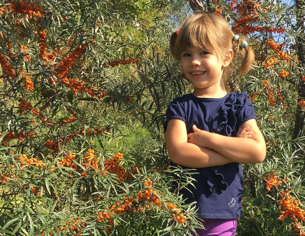 Kislány a homoktövis ültetvényen